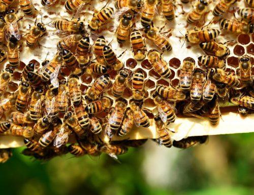 Cum ar arăta lumea fără albine?
