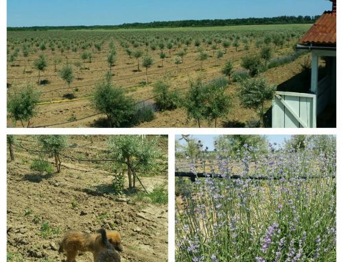 Plantatie de Catina Ecologica